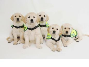 Guide Dogs Week, 3 to 11 October, Specsavers will be dressing up in bright clothes, decorating stores and taking part in an array of charity challenges.